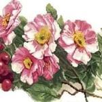 Шиповник розе признавался Часть2