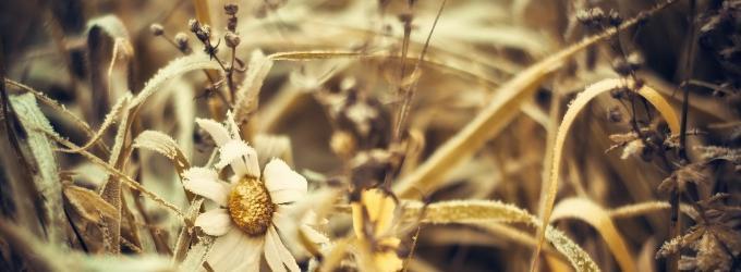 Десять тысяч сухих цветов