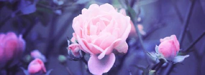 Цветите