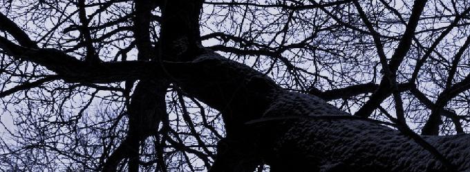 Я – дерево
