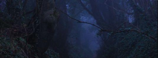 В колдовском лесу