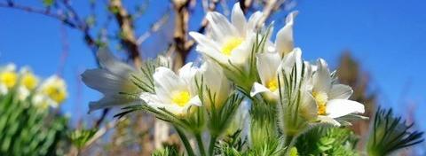 Весна явилась...