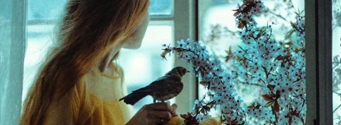 Птицы (не) говорят