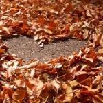 Безответная осень