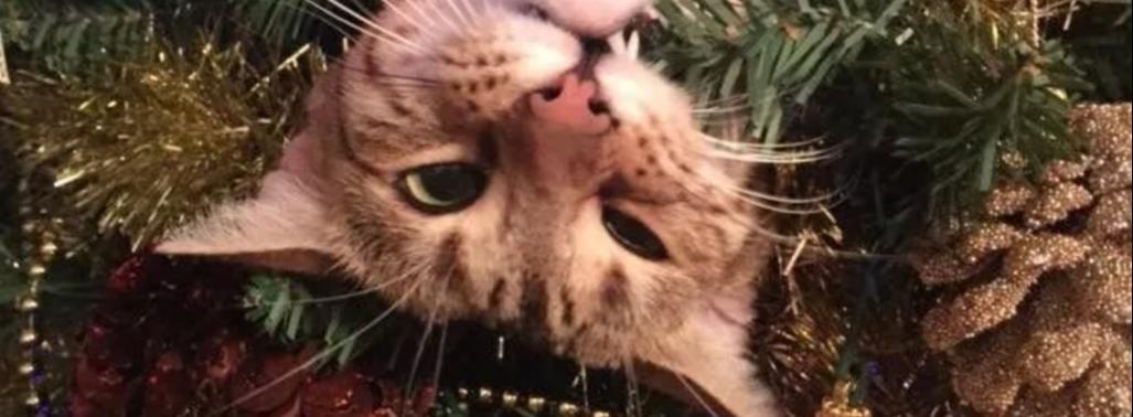 Новый год по-кошачьи - праздник, кот, детскиестихи, стихидетям, новый год