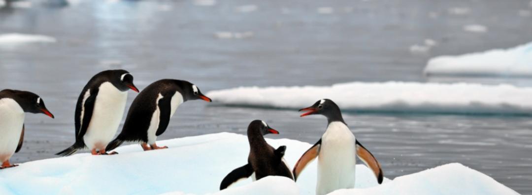 Дельфины и пингвины