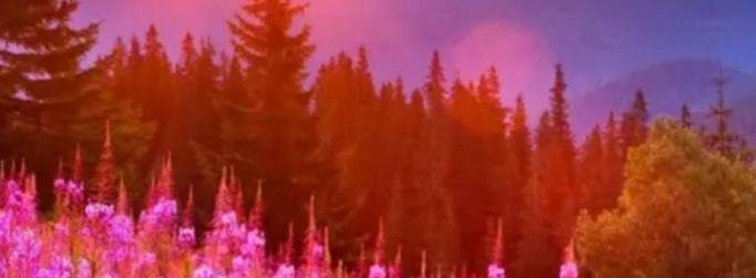 Гравюра - закат, пейзажная лирика