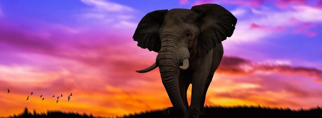 Гигант - слон, стихи для детей