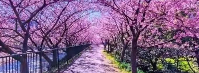 Задумана Весна