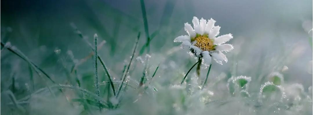 Любимый цветочек - пейзажная лирика