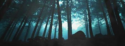 Этот лес...