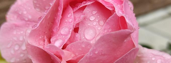 Цветочный роман