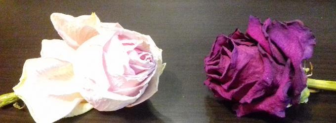 все розы завянут