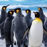 Penguin-Boogie - Буги пингвинов