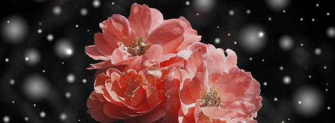 Цветы на снегу - снег, цветы, о жизни, лирика