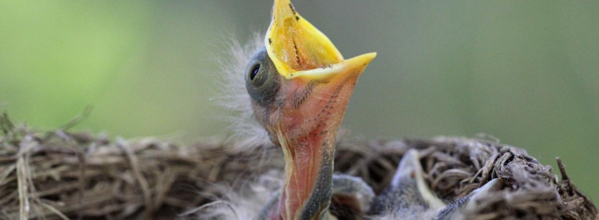 Птичья школа - птицы, стихи для детей, животные, заходер, стихи заходера