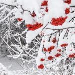 Первый снег. Зима.
