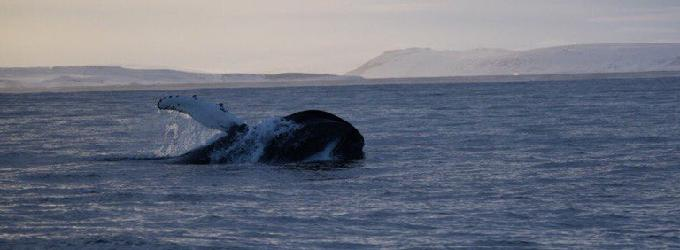 Про кита
