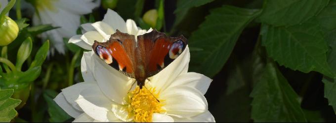 Счастье-бабочка