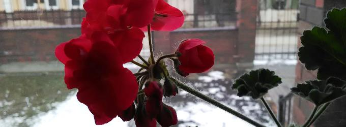Вдохни весну