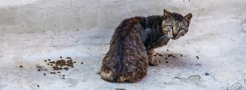 Уродливый кот
