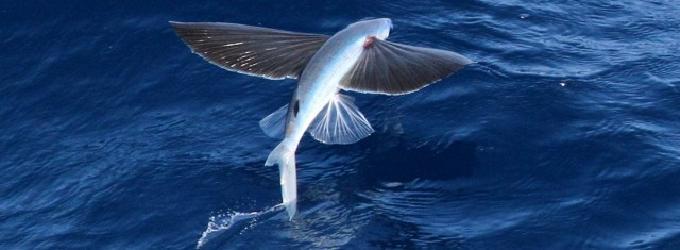 Умеют ли рыбы летать - мысли, вдохновение, лирика, философская лирика