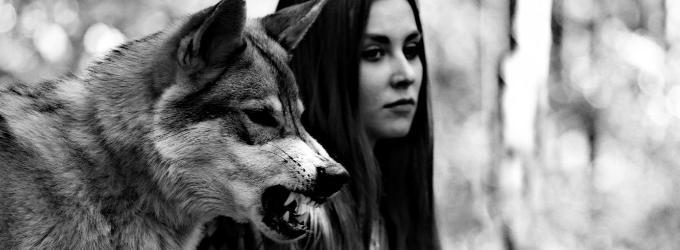 Волк - снег, волк, лес, зима, сказка