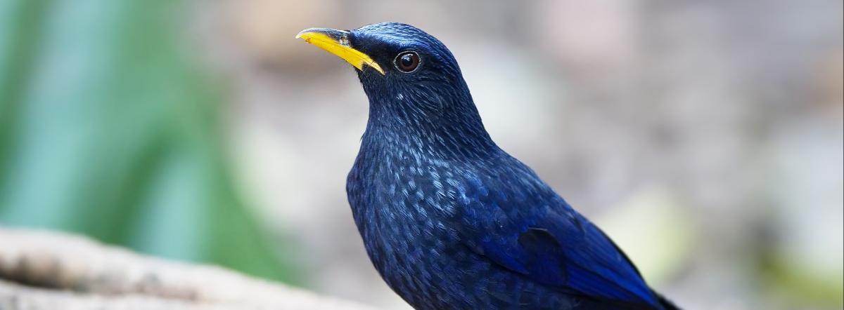 Синяя птица краткое содержание - кратко, краткое содержание, краткий пересказ, классика