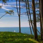 Лес и Океан
