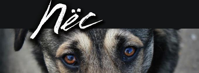 Пёс - собаки,животные,стихиоживотных