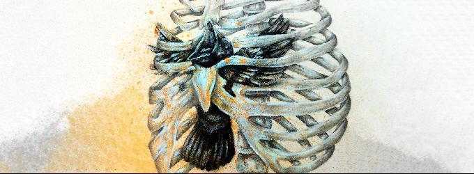 Птица в грудной клетке