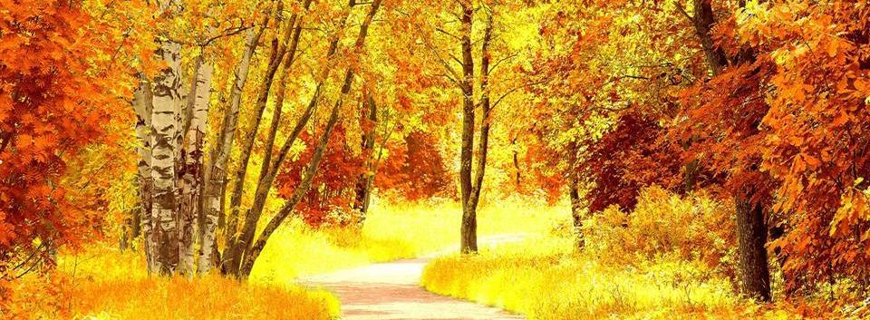 Осень - это...