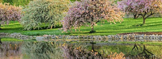 Весенний сад - сад,весна,цветение