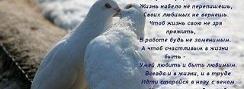Птицы площадей от 9. 06. 2013