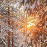 Царица зима от 13. 12. 2020г
