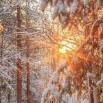 Зимняя сказка от 28. 11. 2013