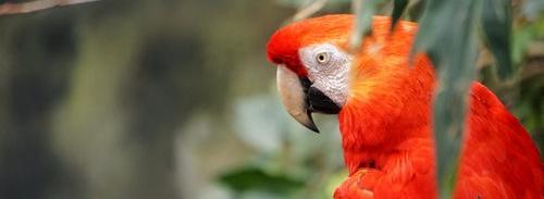 """Попугай, знающий несколько """"интересных"""" фраз"""