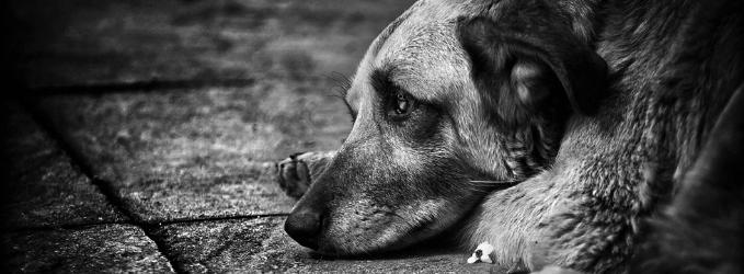 Забытый пёс