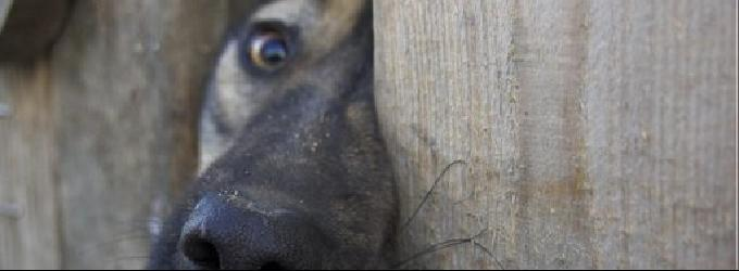 Бредовая дымка - пёс
