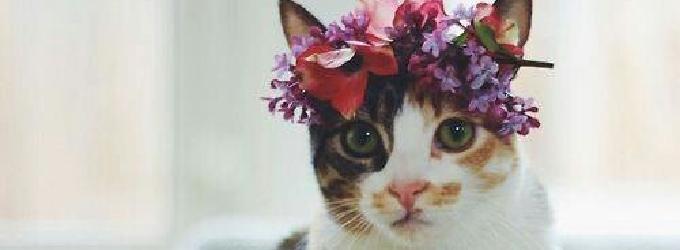 Кошачья душа - философия, лирика