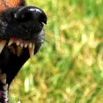 Собака Баскервилей краткое содержание