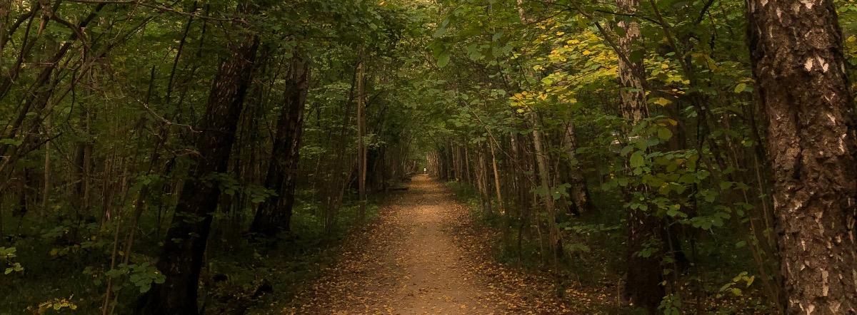 Осень Осень - поэзия, муза, природа, осень, стихи