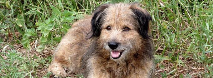 Собака-Чубакка