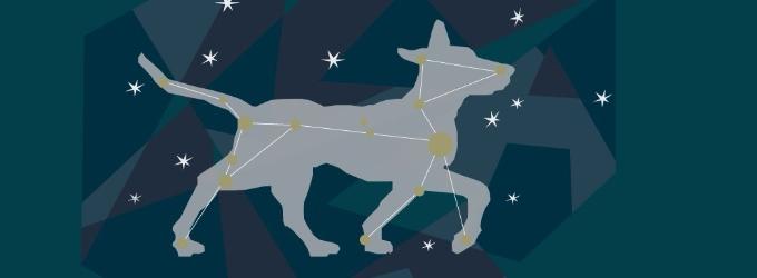 В созвездии пса